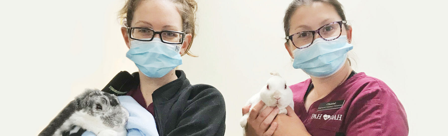 Two veterinary employees holding rabbits