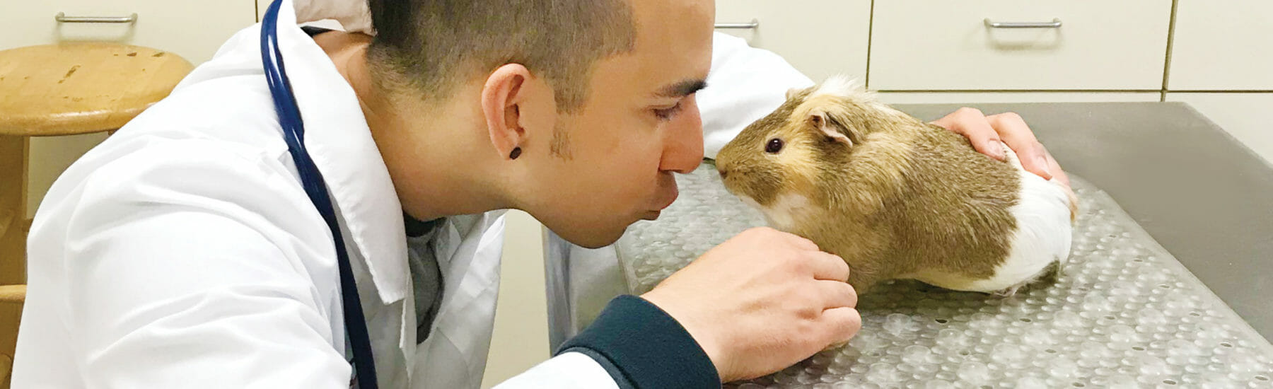 Veterinarian face to face with pocket pet