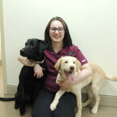 Veterinary assistant kneeling next to two dogs