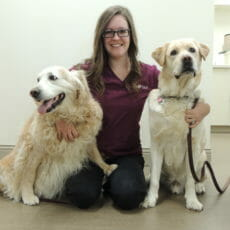 Registered vet technician sitting next to two dogs