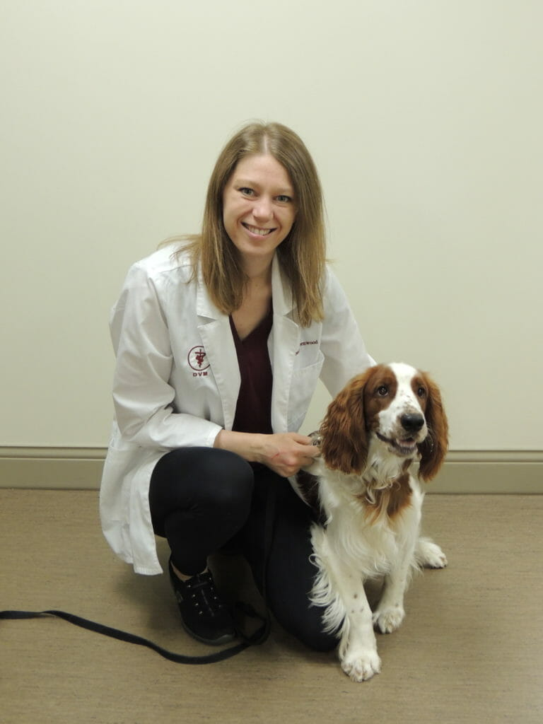 Veterinary employee kneeling next to white and brown dog