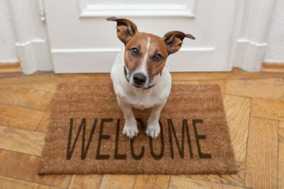 Brown dog on welcome mat