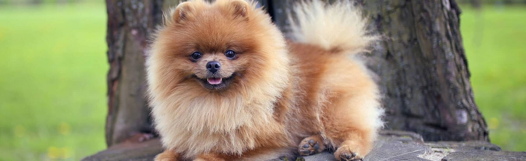 Small fluffy dog sitting on a tree stump